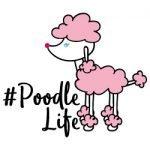Poodle Life 684